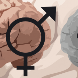 Does Your Brain Have a Sex?