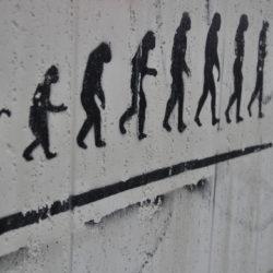 The Inexpert Ape