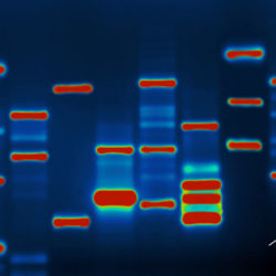 Standing on the Gene: an interview with Professor Wolf Reik