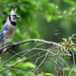 Can Birds Read Minds?