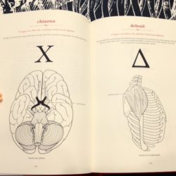 Review: The Secret Language of Anatomy