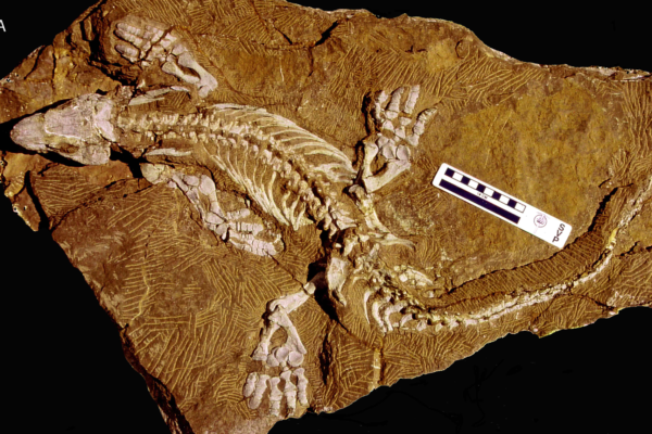 Walking in the footsteps of robotic fossils